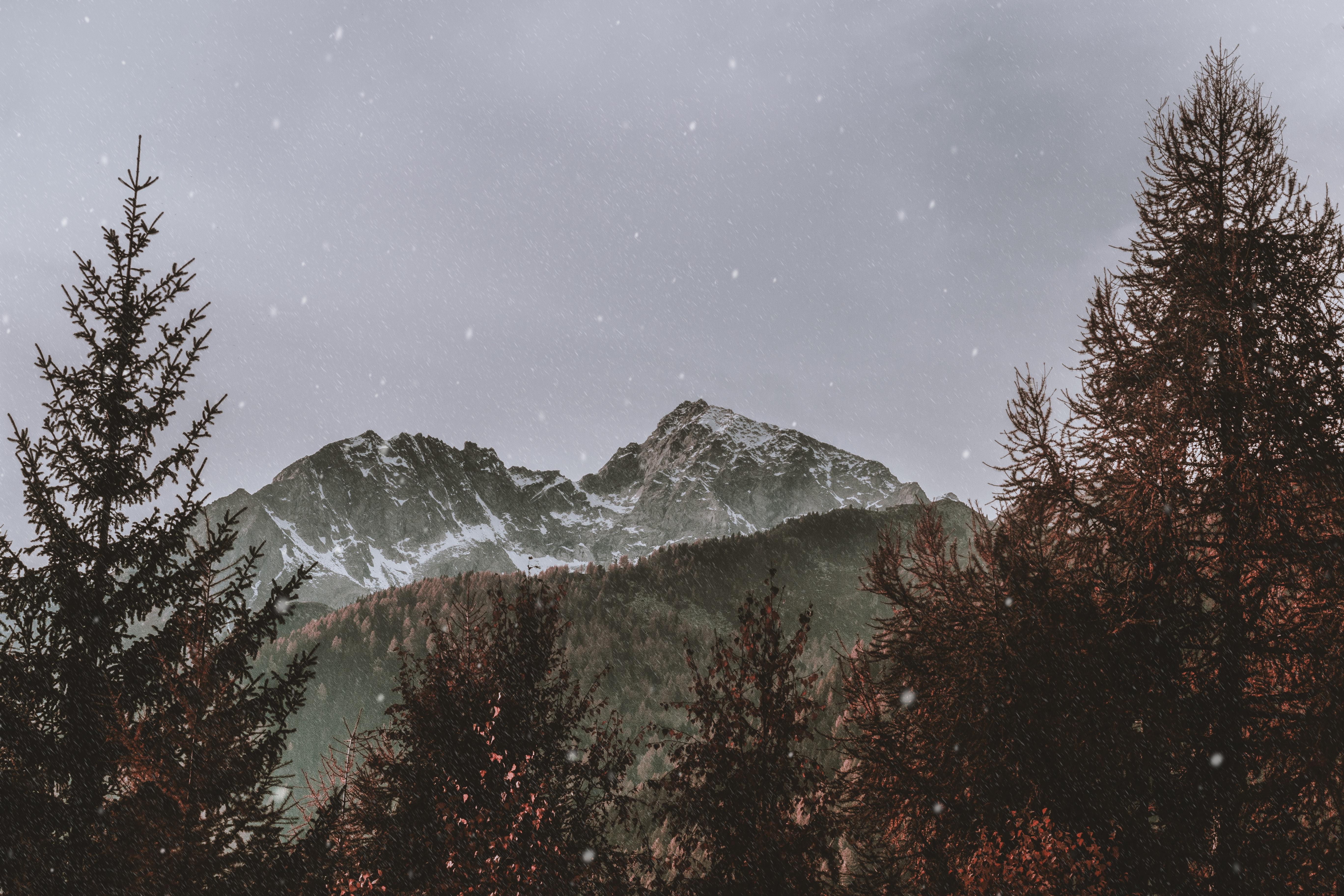 cold-daylight-fog-1405140